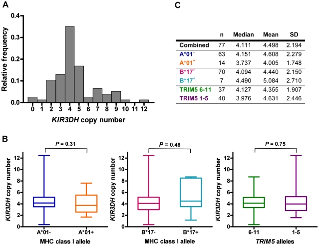 Distribution of KIR3DH copy numbers in Indian-origin rhesus monkeys. Copy numbers of KIR3DH genes were determined using quantitative real-time PCR on genomic DNA of 77 Indian-origin rhesus monkeys. (A) Distribution of KIR3DH copy numbers in the entire cohort of monkeys. (B) Boxplots of KIR3DH copy number distribution in rhesus monkeys divided into three cohorts: Mamu-A*01 – and Mamu-A*01 + rhesus monkeys, Mamu-B*17 – and Mamu-B*17 + rhesus monkeys and rhesus monkeys expressing only TRIM5 alleles 1–5 or expressing at least one TRIM5 allele from the group 6–11. (C) The median, mean and standard deviation (SD) of KIR3DH copy numbers are shown for various subgroups of rhesus monkeys. P values were calculated using the Mann-Whitney U test (two-tailed).