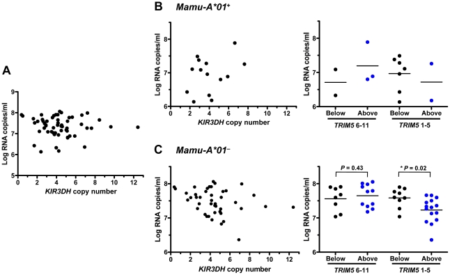 Association of KIR3DH copy numbers and peak plasma SIV RNA levels in Indian-origin rhesus monkeys. KIR3DH copy numbers were determined by quantitative real-time PCR using genomic DNA from rhesus monkeys. Peak plasma SIV RNA levels were quantified on day 14 post-SIVmac251-infection. Scatter plots represent the relationship between SIV peak viral load and KIR3DH copy numbers in the entire cohort of rhesus monkeys ( P = 0.70) (A), in Mamu-A*01 + rhesus monkeys ( P = 0.24) (B) and in Mamu-A*01 – rhesus monkeys ( P = 0.08) (C). The Mamu-A*01 + and Mamu-A*01 – rhesus monkeys were subdivided into two groups: one group having KIR3DH copy numbers below the median (black) and the other group having KIR3DH copy numbers above the median (blue). These groups were further subdivided into monkeys expressing only TRIM5 alleles 1–5 or expressing at least one TRIM5 allele of the group 6–11. P values were determined using the Mann-Whitney U test (two-tailed).