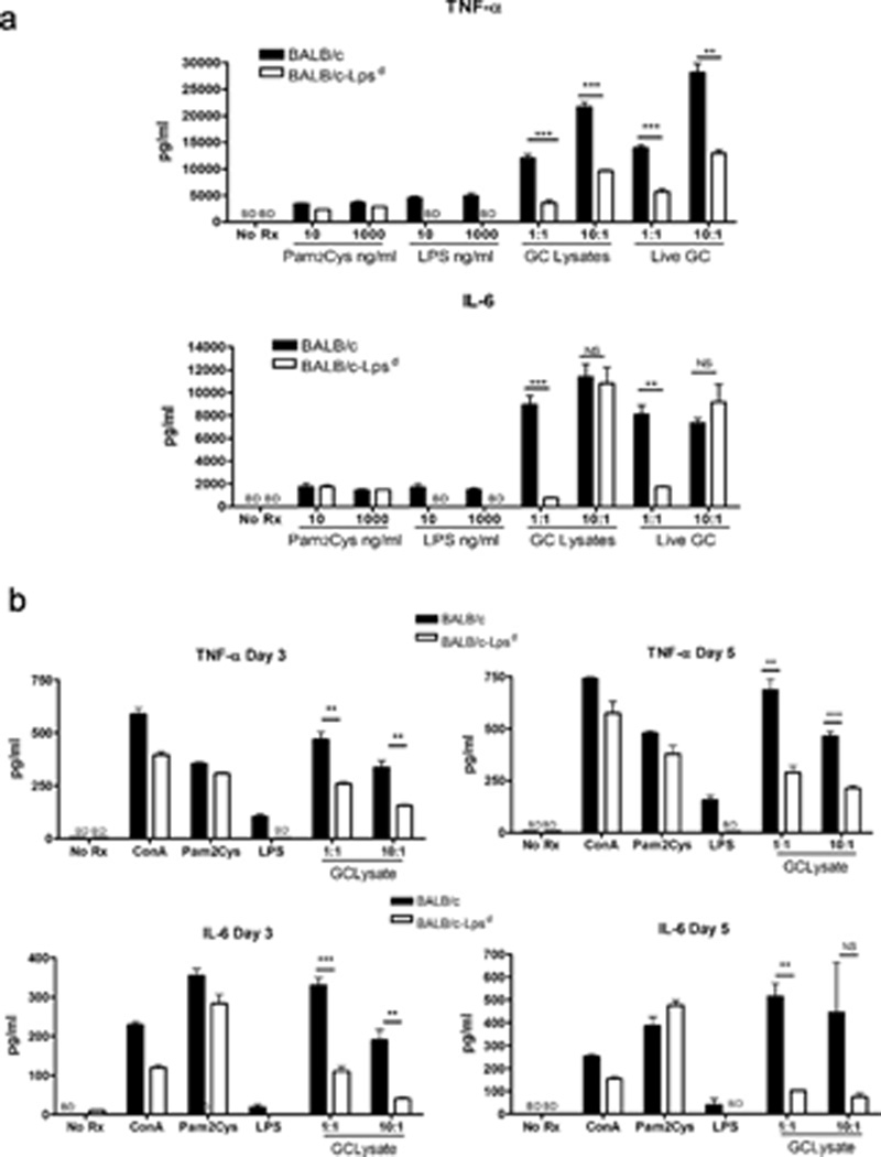 Cells derived from TLR4 mutant mice are hyporesponsive to stimulation with N. gonorrhoeae ( a ) BMDM or ( b ) splenic mononuclear cells were derived from BALB/c and BALB/c- Lps d mice as described in the text, and treated with the indicated agents. Supernatant was collected at 24 hours for ( a ) and at the indicated time points for ( b ), and assayed for TNF-α or IL-6 by ELISA. Pam2Cys, lipopeptide Pam 2 -Cys-Ser-Lys 4 ; GC lys, N. gonorrhoeae FA1090 crude lysates. Significance was calculated using an unpaired t-test, with p values as follows: **, p