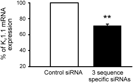 <t>qRT-PCR</t> confirms knock-down of K V 1.1 following transfection with 3 sequence specific mRNAs. The amount of <t>cDNA</t> generated from the K V 1.1 mRNA at 2 days following transfection was normalised to β-actin, mean fall in K V 1.1 mRNA = 29. 67 ± 2.11%; ** p = 0.005, one-sample t -test, indicative of a minimum 43% mRNA knock-down in neurons transfected with active sequence.