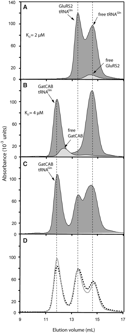 Binding experiments with tRNA Gln , GluRS2 and GatCAB as shown by size-exclusion chromatography. ( A ) Comparison of isolated GluRS2 and GluRS2/tRNA Gln  complex profiles. The association enabled us to estimate a  K D  value for GluRS2 and tRNA Gln  binding (see 'Materials and Methods' section). ( B ) Comparison between free and tRNA Gln -complexed GatCAB. ( C ) Gel-filtration of a solution containing the three partners. ( D ) The same experiment as described in (C) was performed with preformed Glu-tRNA Gln  (grey line) or after incubation of the three partners within an aminoacylation medium containing free Glu and ATP, to provide endogenous Glu-tRNA Gln  (dotted line). Proteins and tRNA Gln  were added at concentrations of 20µM each for the experiments shown in all panels.