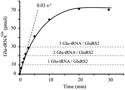 Pre-steady state measurements of Glu-tRNA Gln  formation by GluRS2. Aminoacylation reactions were performed at 4°C with 10µM tRNA Gln , and 1µM GluRS2, taking 10µl aliquots to measure product formation. No burst indicative of a limiting product-release step was observed.