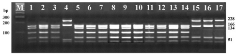 PCR-RFLP fragments of the 23S rRNA gene in 3% agarose gel electrophoresis digestion with <t>Taq</t> I. Lane M: 100 bp <t>DNA</t> ladder; lane 1: B. hyodysenteriae B204; lane 2: B. hyodysenteriae B234; lane 3: B. hyodysenteriae B169; lane 4: B. pilosicoli P43/6/78; lane 5 to 14: B. hyodysenteriae field isolates; lane 15: B. murdochii 56-150; lane 16: B. intermedia PWS/A; lane 17: B. innocens B256.
