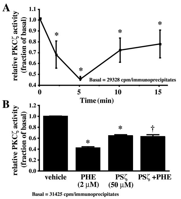 PHE decreases PKCζ activity in rat-1 fibroblasts. A, Cells were treated with 2 μM PHE for 0, 2, 5, 10 and 15 min, lysed and immunoprecipitated with PKCζ antibody for a kinase assay using [γ- 32 P]ATP and a selective peptide substrate as described in Methods. Relative PKCζ activity was expressed as the fold (increase or decrease) of basal. Values are the mean ± S.E. of four independent experiments. * Value significantly different from the basal, p