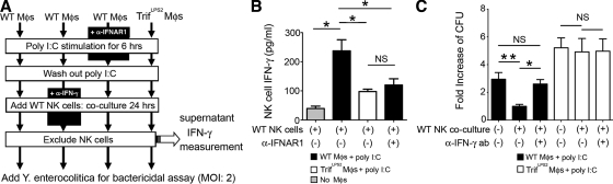 TRIF-mediated IFN-β induction by macrophages elicits IFN-γ production from NK cells which further enhances the bactericidal function of the macrophages. (A) Peritoneal macrophages isolated from WT and Trif LPS2 mice were stimulated with poly I:C for 6 h in the presence or absence of anti-IFNAR1 antibody. After washing out poly I:C, macrophages were co-cultured with WT splenic NK cells for 24 h in the presence or absence of neutralizing anti–IFN-γ antibody. After excluding NK cells, the remaining macrophages were subjected to bactericidal assay. (B) ELISA measurement of IFN-γ production from WT NK cells after co-culturing with poly I:C–stimulated macrophages in the presence or absence of anti-IFNAR1 antibody. Combined data from three independent experiments ( n = 6 each; *, P