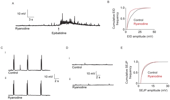 The effect of ryanodine on epibatidine-induced, electrically-evoked, and spontaneous neurotransmitter release. (A) A typical membrane potential trace showing the effects of epibatidine application following exposure to 10 µM ryanodine for 60 minutes. (B) A cumulative frequency plot of EID amplitude in the presence of ryanodine. There is a significant shift to smaller EID amplitudes in the presence of ryanodine (P