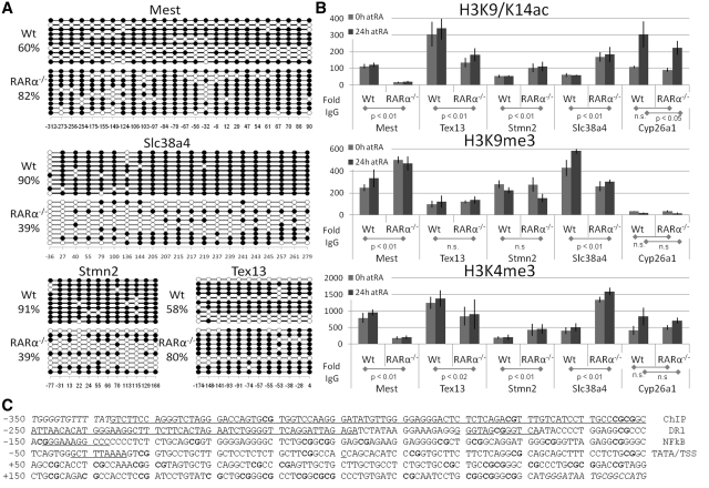 The Epigenetic Signatures of Mest, Tex13, Stmn2 and Slc38a4 promoter regions. ( A ) Mest and Tex13 promoters displayed increased methylation in RARα −/− relative to Wt cells. In contrast, Slc38a4 and Stmn2 displayed decreased methylation in RARα −/− relative to Wt cells. Each horizontal line represents the methylation status of an independent allele. The numbers below the figures indicate the CpG position relative to the transcriptional start site (+1). ( B–D ) Promoter specific ChIP were quantified by real-time PCR on chromatin IPed from Wt and from RARα knockout cells treated with vehicle or RA (vehicle—0 h; gray and RA—24 h; dark gray bars). (B) Histone modification in F9 Wt and RARα −/− cells. H3K9/14ac modifications (upper panel). In RARα −/− cells H3K9/K14ac levels at the Mest and Tex13 promoters is decreased, while levels at the Stmn2 and Slc38a4 promoters is increased relative to Wt. (C) H3K9me3 modifications (middle panel). In RARα −/− cells the H3K9me3 level at the Mest promoter is increased, while the level at the Slc38a4 promoter is decreased. H3K9me3 levels at the Tex13 and Stmn2 promoters are not significantly changed in RARα −/− cells. A low signal (15- to 30-fold above the IgG) for H3K9me3 is seen at the Cyp26a1 promoter. (D) H3K4me3 modifications (lower panel). In RARα −/− cells H3K4me3 levels at the Mest and Tex13 promoters are decreased, whereas the levels at the Stmn2 and Slc38a4 promoters are increased relative to Wt. The signal from the IgG IP was set to 1 for each PCR. The data represent three independent IPs for each Ab, harvesting new chromatin for each IP. Statistical significance is demonstrated by P- values below 0.05 for the indicated comparisons. (C) Mest proximal promoter region. The promoter (excluding the sequences in italics) was evaluated for CpG methylation (bold). Underlined sequences indicate putative elements: RARE (DR1), NFkB-binding site, TATA box (TATA), transcriptional start site (TSS) and the exact region targeted by ChIP primers (labels to the right).
