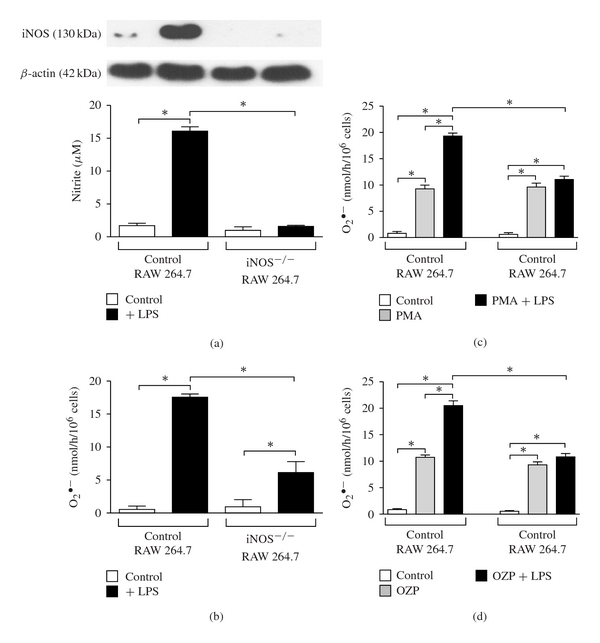 iNOS protein expression, nitrite accumulation, and O 2 • − production in RAW 264.7 and iNOS −/− RAW 264.7 cells. Macrophages were stably transfected with shRNA against iNOS and then stimulated with LPS (50 ng/mL). RAW 264.7 and iNOS −/− RAW 264.7 cells were incubated in DMEM media containing 400 μ M of L-arginine. iNOS protein expression in cell lysates, accumulation of nitrite (a), and O 2 • − production in cell supernatants (b) were determined using methods described in Section 2 ( n = 6). The O 2 • − production was also potentate using (c) PMA and (d) OZP with or without co-administration of LPS (50 ng/mL) ( n = 6). * P