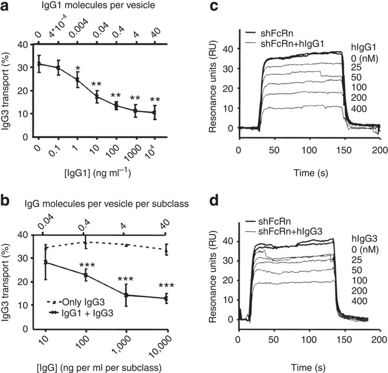 Concentration-dependent inhibition of IgG3 transport by IgG1 owing to competitive binding to FcRn. Apical to basolateral transport of V-gene matched recombinant IgG3 and IgG1. ( a ) IgG3 concentration was kept constant (10 μg ml −1 ) in the absence or presence of increasing amounts of IgG1. IgG3 transport was inhibited up to a plateau when more than 1 ng ml −1 IgG1 was present. All data points were compared with the samples without IgG1 by one-way ANOVA and Dunnett's multiple comparison test. ( b ) Recombinant IgG3 alone (dotted line) or mixed with IgG1 (solid line) at a 1:1 ratio in increasing concentrations were added to the apical compartment and IgG3 was measured in the basolateral compartment. At concentrations lower than 1 μg ml −1 , transport of IgG3 increased up to levels similar to those observed when IgG3 is transported alone. All data points from mixed IgG1 and IgG3 transport in ( b ) were compared by t -test to the corresponding IgG3 transport without IgG1 present. The theoretical number of IgG molecules present in 1.25-μm-wide sorting endosomes described in ref. 15 , assuming an equal concentration within these vesicles as present in the medium, is indicated on the secondary upper x -axis in ( a , b ). This arbitrary value is given as an indication only as these calculated values cannot take miscellaneously elongated or tubule-tethered vesicles into account 13 15 ( c , d ). Surface plasma resonance analysis showing binding of 100-nM recombinant shFcRn to IgG3-immobilized CM5 biosensor chips (1,300 RU) at pH 6.0 in the presence of increasing concentrations of 25, 50, 100, 200 or 400-nM recombinant soluble IgG1 ( c ) or IgG3 ( d ). The data in ( a , b ) represent the mean and standard deviation. All experiments were repeated at least three times with similar results. * P ≤0.05; ** P ≤0.01; *** P ≤0.001.