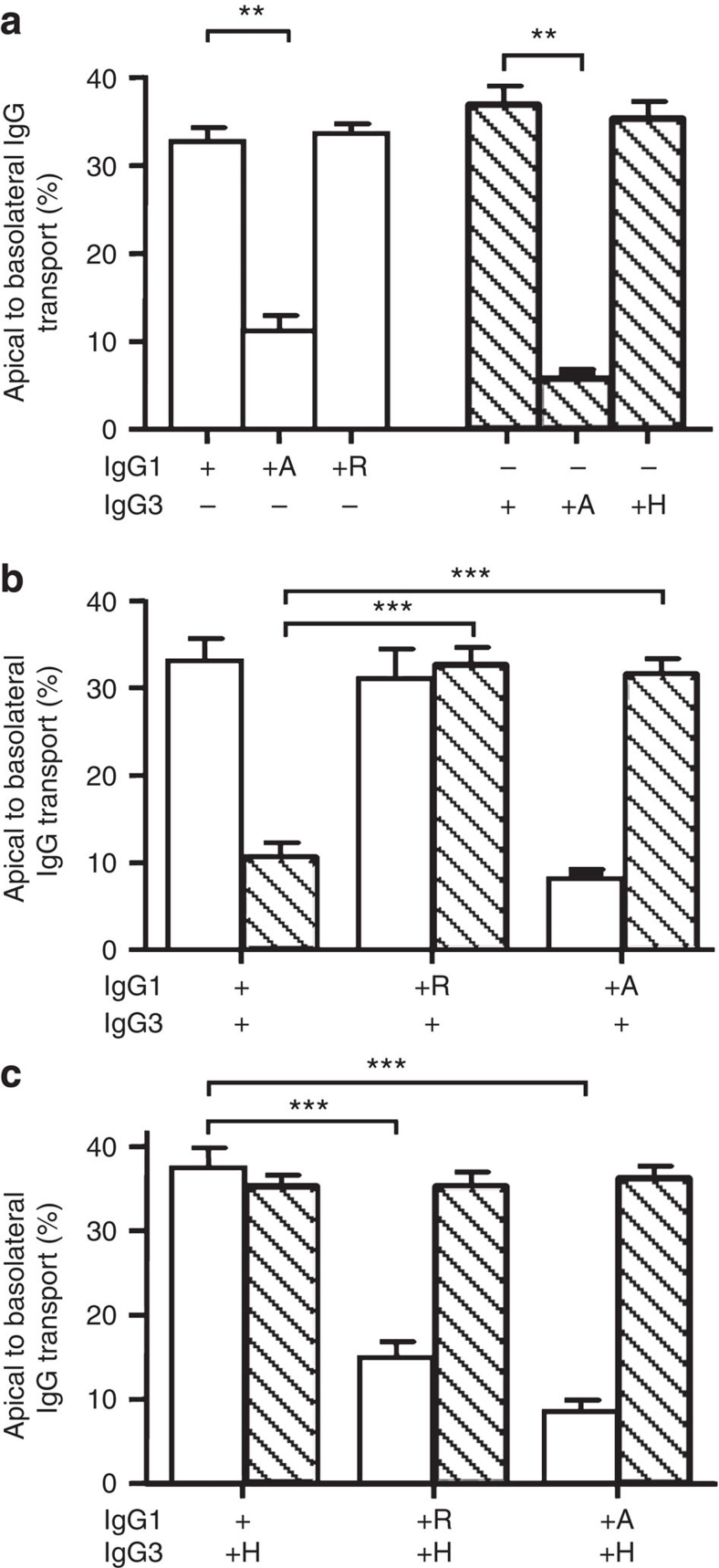 Inhibition of IgG3 transport by IgG1 is due to R435 in IgG3. ( a ) Mutating the amino acid at position 435 in IgG1 (H435) and in IgG3 (R435) to an alanine reduces transport, while exchanging the histidine native to IgG1 and the arginine native to IgG3 on each others backbone had no effect on their transport rate when offered separately to FcRn-transfected A375 cells. ( b ) Whereas transport of IgG3-WT was inhibited in the presence of IgG1-WT, IgG1 bearing an alanine or an arginine at position 435 had no effect on IgG3 transport. ( c ) Transport of IgG3 with a histidine at position 435 was not inhibited by WT IgG1. When the amino acids found at position 435 in IgG1 and IgG3 were swapped, IgG1–H435R transport was inhibited by IgG3–R435H. ( a – c ) ± indicate the presence or absence of IgG (10 μg ml −1 per subclass), IgG1 is represented by open bars, IgG3 by hatched bars. The presence of mutated variants (435H, 435A and 435R) is indicated by the corresponding letter. The data represent mean and standard deviation from three independent experiments. Transport of WT IgG was compared with transport of mutant IgG by one-way ANOVA with Dunnett's multiple comparison test and significance. ** P ≤0.01; *** P ≤0.001.