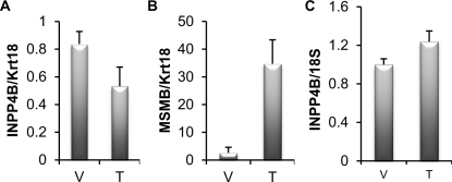 INPP4B expression is not induced by testosterone in mice A. Four month old male castrated mice were treated with vehicle (V) (n=5) or 1 μg testosterone (T) (n=9). Prostates were isolated 24 hours following treatment, RNA extracted and Inpp4b and Krt18 expression was analyzed by quantitative RT-PCR. Inpp4b expression was correlated to Krt18 , an epithelial specific marker and expression normalized to the castrated group. B. Brain tissue from the same mice were collected in parallel and analyzed for Inpp4b and 18S expression. C. To control for testosterone gene regulation, Msmb expression was analyzed by quantitative RT-PCR (error bars denote ± S. E.).