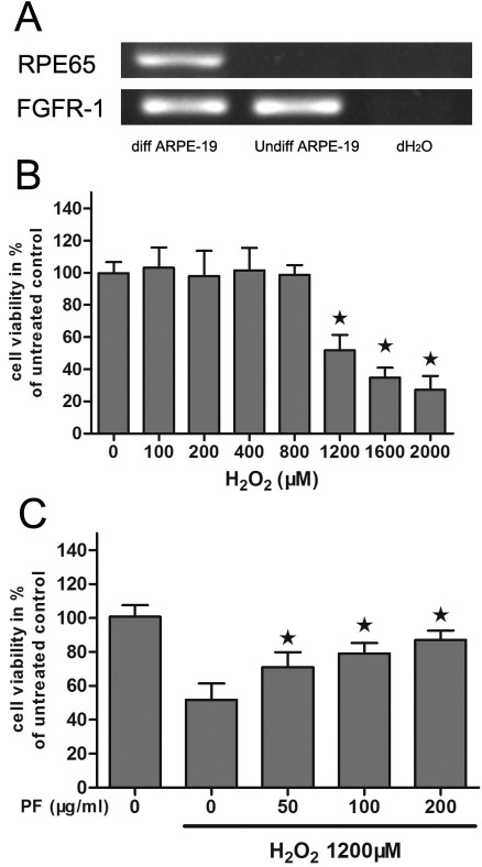 Protective effects of paeoniflorin (PF) on H 2 O 2 -induced differentiated ARPE-19 cells. A : Levels of retinal pigment epithelium 65 (RPE65) and fibroblast growth factor receptor-1 (FGFR-1) mRNA were measured by Reverse transcriptase PCR in undifferentiated (Undiff ARPE-19) and differentiated (Diff ARPE-19) ARPE-19 cells. Total <t>RNA</t> from undifferentiated or differentiated ARPE-19 cells was reverse transcribed and amplified using primers for RPE65 and FGFR1. A reaction omitting the <t>cDNA</t> was used as a negative control (NC). B : Cell viability of differentiated ARPE-19 cells following H 2 O 2 exposure were measured by MTT assay. The cells were treated with or without different concentrations of H 2 O 2 (100–2,000 μM) for 24 h. Cell viability was measured by an MTT assay. The results are expressed as percentage of control, and each value represents the mean±SEM of three independent experiments (n=3 experiments, *p