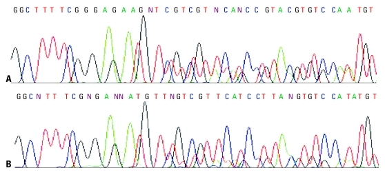 Sequencing maps of known EGFR deletion in exon 19 of plasma cfDNA. cfDNA was extracted by modified phenol-chloroform (MPC) method (A) and QIAamp MinElute Virus Spin kit (Qiagen kit) (B). In (A), the height of mutant peak is similar to that of wild-type peak, while the height of mutant peak in (B) is much lower than that of wild-type peak. EGFR, epidermal growth factor receptor.