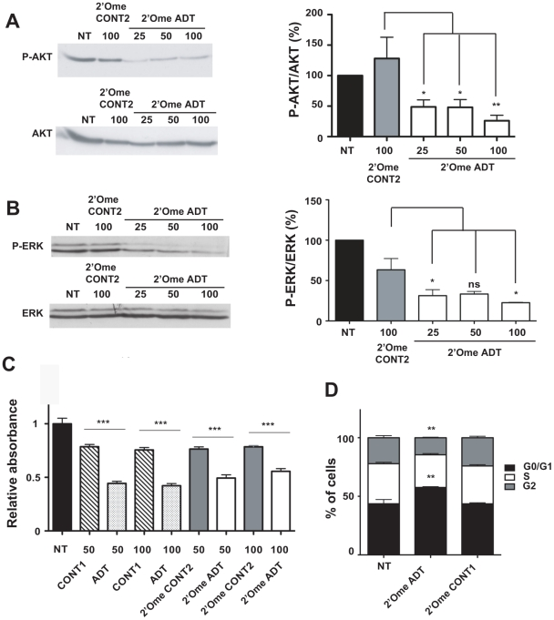 IGF-IR gene silencing inhibits signaling, cell cycle progression and proliferation. EMT6 cells were transfected with 25 to 100 nM 2′-O-methyl ADT siRNA and harvested 48 h later after standard growth conditions (10% FCS) for analysis by immunoblotting with: ( A ) antibodies against phospho-S473 AKT and total AKT, and ( B ) antibodies against phospho-T202/T204 ERKs and total ERK. Black bars represent mock transfected cells (NT). Representative experiments are presented and quantitative analysis of three independent experiments are shown on the right of each gel with means ± SEM. * P