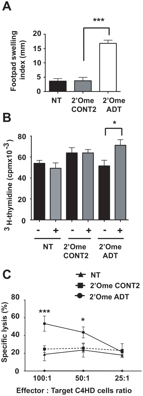 Immunization with C4HD cells treated with IGF-IR siRNAs. ( A ) Delayed-type hypersensitivity (DTH) response. BALB/c mice (n = 10) were immunized with three injections of irradiated C4HD cells (black bar) or irradiated 2′-O-methyl ADT siRNA (white bar) or 2′-O-methyl CONT2 siRNA (grey bar) transfected C4HD. NT, non-transfected cells. Data are presented as mean ± SEM; *** P