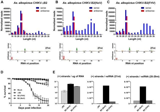 Production of piRNA-like viral small RNAs increases during pathogenic virus infections. Size distribution and nucleotide analysis of virus-derived small RNAs in the head and thorax of A. albopictus infected with CHIKV-ΔB2 ( A ), CHIKV-B2 (NoV) ( B ), or CHIKV-B2 (FHV) ( C ). Survival of A. albopictus after infection with recombinant CHIK viruses and mock injection ( D ). Error bars indicate the standard deviation among triplicate cohorts (n = 90). Strand-specific quantitative real-time PCR analysis of CHIKV (+) strands; shown as the number of copies per virus-derived small RNA in 1ug of total RNA (calculated from normalized reads identified in the corresponding library) ( E ). Error bars indicate the standard deviation among three biological replicates.