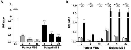 Confirmation of miR-19 binding to miR-19 sponge constructs. ( A ) Luciferase reporter assays in HEK293 cells reveal that repression of Renilla activity is more prominent in reporter vectors that contain perfect MBS sequences as compared to reporter vectors that encode bulged MBS sequences and is in both cases dependent on the number of MBS. ( B ) Release of miR-19 specific repression of Renilla luciferase activity by anti-miR-19a/b oligos confirms that miR-19 binds to the miR-19 MBS sequences. No release of luciferase activity is observed with a control anti-miR-16 oligo. Open bars: Mock, grey bars: miR-16 inhibitor and black bar: miR-19 inhibitor mix. For each graph the number of MBS per reporter vector is indicated on the x-axis and on the y-axis the ratio of Renilla (R) over Firefly (F) luciferase is depicted. * = p-value