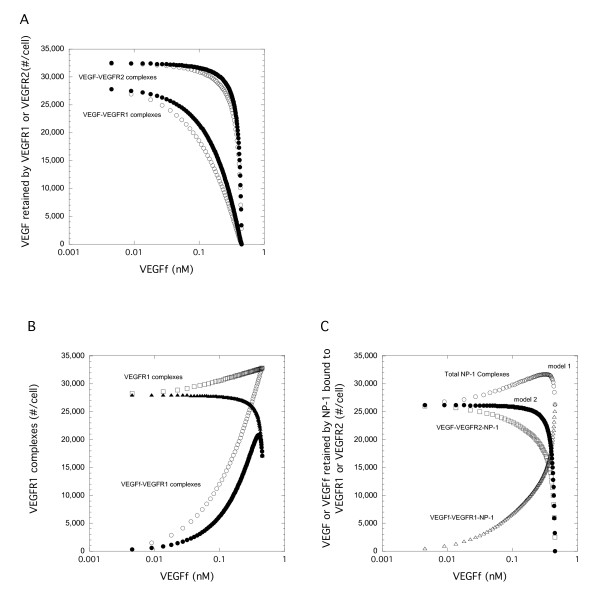 VEGF Conversion to VEGFf Impacts Binding to VEGFR1 and VEGFR2 . Simulations were run for 2 h using baseline parameter values. The total concentration of VEGF and VEGFf was kept constant at 0.45 nM and VEGFR1, VEGFR2, and NP-1 equal at 12,000 #/cell. (A) VEGF bound to VEGFR2 or VEGFR1 for Model 1 (VEGFf can bind to VEGFR1 alone or when VEGFR1 is bound to NP-1 -open) and Model 2 (VEGFf cannot bind to VEGFR1 bound to NP-1 - filled) are shown. (B) VEGFR1 binding by VEGFf (Model 1- open circle, Model 2 -filled circle), or the sum of both VEGF and VEGFf bound to VEGFR1 (Model 1 - open square, Model 2 -filled triangle) is plotted. (C). NP-1 complexes increase for Model 1. VEGF-VEGFR2-NP-1 complexes (Model 1-open square), VEGF-VEGFR1-NP-1 (Model 1 - open triangle), and the sum of VEGF-VEGFR1-NP-1 and VEGF-VEGFR2-NP-1 complexes (Model 1 -open circle, Model 2 - filled circle). Note that there are no VEGF-VEGFR1-NP-1 complexes with Model 2.