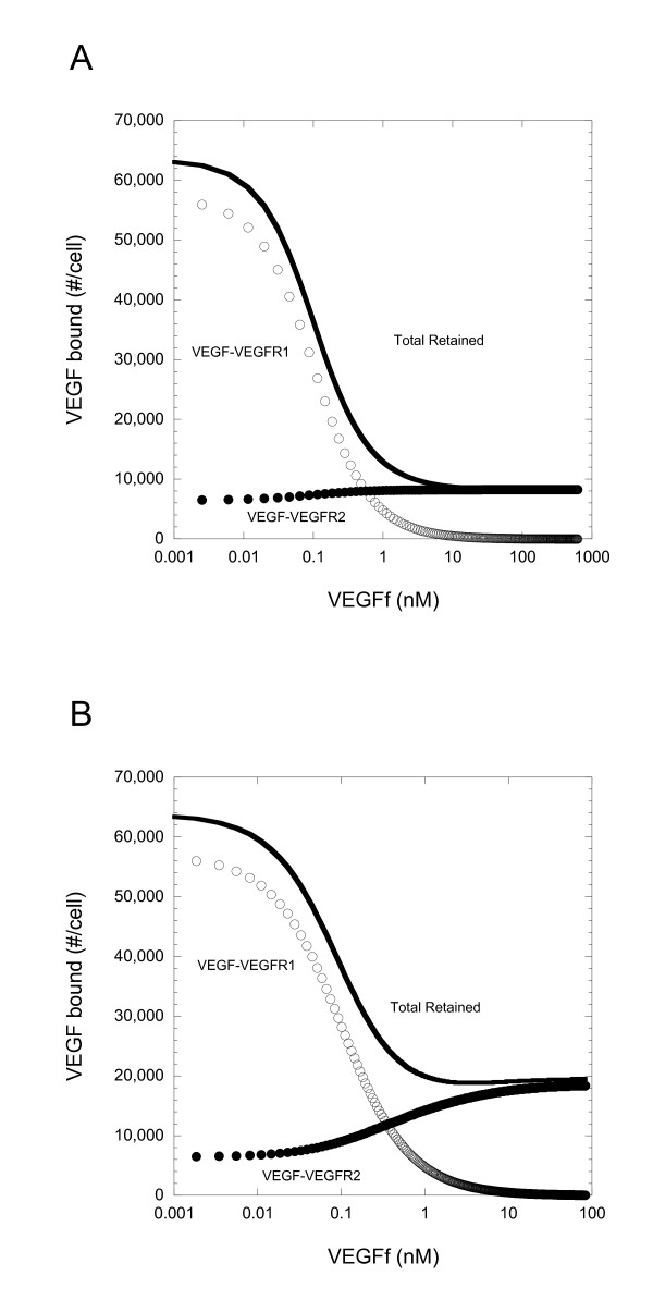 Impact of VEGFf on VEGF-Receptor binding differs when VEGFf interacts with VEGFR1 and NP-1 . Simulation results for (A) Model 1 (VEGFf can bind to VEGFR1 and NP-1) and (B) Model 2 (VEGFf cannot bind to VEGFR1 and NP-1) 3 h after introduction of VEGF(1 ng/ml or 0.023 nM) and VEGFf to the cell system. VEGF bound to VEGFR1 (open), <t>VEGFR2</t> (filled), and sum of VEGF bound to VEGFR1, VEGFR2, NRP, and ECM (solid line)