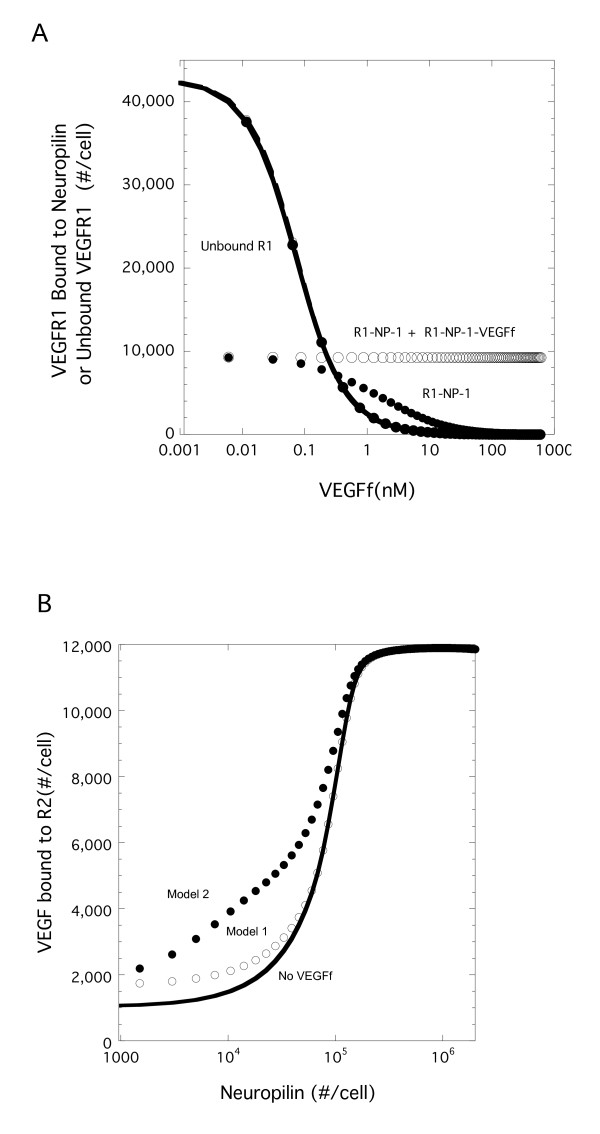 NP-1 sequestering by VEGFR1 is key to difference in VEGF binding to VEGFR2 . (A) Simulations were run with VEGF (0.023 nM) and variable VEGFf for 3 h using standard parameter values (Table 2). VEGFR1 bound to NP-1 or unbound VEGFR1 are shown for Model 1 (VEGFf can bind to VEGFR1 and NP-1 - open) and Model 2 (VEGFf cannot bind to VEGFR1 and NP-1 -filled). Note the direct overlap of the unbound VEGFR1 for the two models. (B) Similar simulations were run but with 0 (solid line) or 1 nM VEGFf for Model 1 (open) and Model 2 (filled) with variable levels of NP-1. VEGF bound to VEGFR2 is shown.
