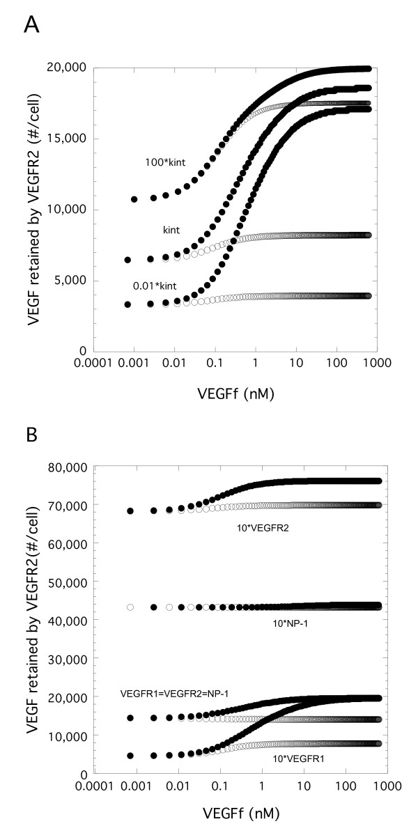 VEGF-mediated endocytosis and relative receptor levels impacts VEGF binding to VEGFR2 . A. Simulations were performed for Model 1 (VEGFf can bind to VEGFR1 and NP-1) and Model 2 (VEGFf cannot bind to VEGFR1 and NP-1) with VEGF (0.023 nM) and variable VEGFf for 3 h using base parameter values except for the internalization rate for VEGF-bound receptors. Total VEGFR2 bound to VEGF (surface and internal) is shown. B. Similar simulations were performed using all base parameter values but the initial conditions were altered to have 12,000 VEGFR1, VEGFR2, and NP-1 (VEGFR1 = VEGFR2 = NP-1), or 12,000 VEGFR1 and NP-1 but 120,000 VEGFR2 (10*VEGFR2), or 12,000 VEGFR2 and NP-1 but 120,000 VEGFR1 (10*VEGFR1), or 12,000 VEGFR1 and VEGFR2 but 120,000 NP-1 (10*NP-1). Model 1 is open circles and Model 2 is the filled circles in both A and B.