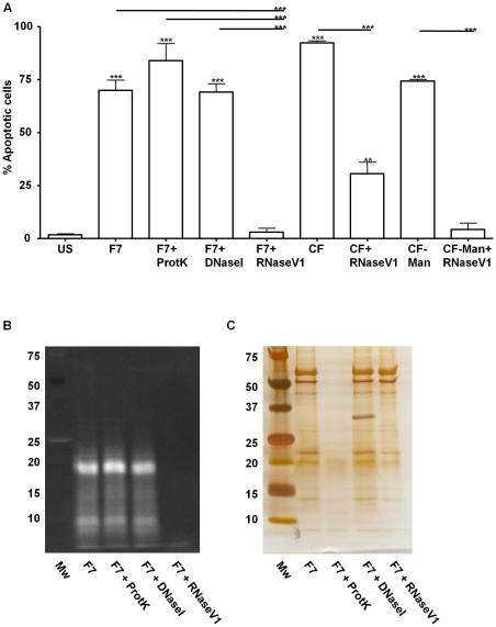RNA in DEAE-Sepharose Fraction 7 induces apoptosis in human monocytes. A. Apoptosis induced by DEAE-Sepharose Fraction 7 (F7), F7 treated with proteinase K (F7+ProtK), F7 treated with DNase1 (F7+DNase1), F7 treated with RNaseV1 (F7+RNaseV1), CF, CF treated with RNaseV1 (CF+RNaseV1), CF-Man, CF-Man treated with RNaseV1 (CF-Man+RNaseV1). Apoptosis was measured by flow cytometry and presented as percentage of human monocytes that stained annexinV positive. *** significance p