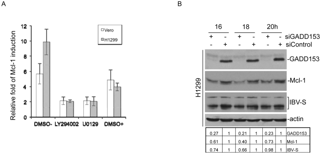 Regulation of Mcl-1 expression by MEK-1, PI3K and GADD153. (A) Induction of Mcl-1 in <t>IBV-infected</t> cells in the presence or absence of either 20 mM of MEK-1 inhibitor U0126 or 40 mM of PI3K inhibitor LY294002. <t>Vero,</t> and H1299 cells were incubated with normal medium (DMSO-), LY294002 in DMSO, U0129 in DMSO and DMSO only (DMSO+) for 1 hour, and then infected with IBV at a multiplicity of infection of approximately 2 in the presence or absence of the inhibitors. Cells were harvested at 16 hours post-infection, and total RNA extracted. The relative amounts of Mcl-1 transcripts were determined by quantitative RT-PCR and normalized against GAPDH. The relative fold of Mcl-1 induction in IBV-infected cells was determined by comparing with mock-infected cells. (B) Induction of Mcl-1 in IBV-infected cells by the pro-apoptotic transcription factor GADD153. H1299 cells were transfected with either siGADD153 or a non-targeting control for 72 hours and subsequently infected with IBV. Cells were harvested at 16, 18 and 20 hours post infection for western blot analysis using specific antibodies against the indicated proteins, with anti-actin as a loading control. M, mock infection.