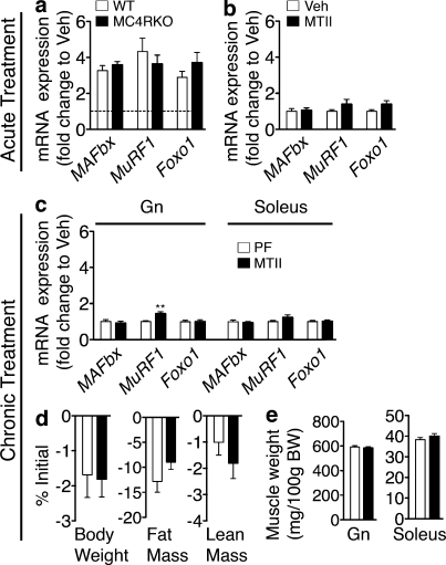 Signaling through the MC4R is not a major contributor to the muscle catabolism independent of food intake. (a and b) Atrophy gene expression in WT and MC4RKO mouse Gn 8 h after acute i.c.v. IL-1β injection (10 ng, n = 8–9/group; a) and in rat Gn 6 h after acute i.c.v. MTII (1 nmol, n = 6–9/group; b) or Veh injection was measured by real-time PCR. (c–e) Rats were treated for 36 h (chronic) with MTII or Veh (1 nmol/12 h × 4, n = 7–8/group). Veh-treated animals were PF to the MTII treatment group. (c) Gene expression in rat Gn and soleus after chronic MTII treatment was measured by real-time PCR. Reported values are relative to GAPDH . (d) Body composition after chronic MTII treatment. (e) Muscle weight normalized to initial body weight (BW). The dotted line in a represents Veh-treated controls at a relative quantity of 1. Data are represented as mean ± SEM. **, P