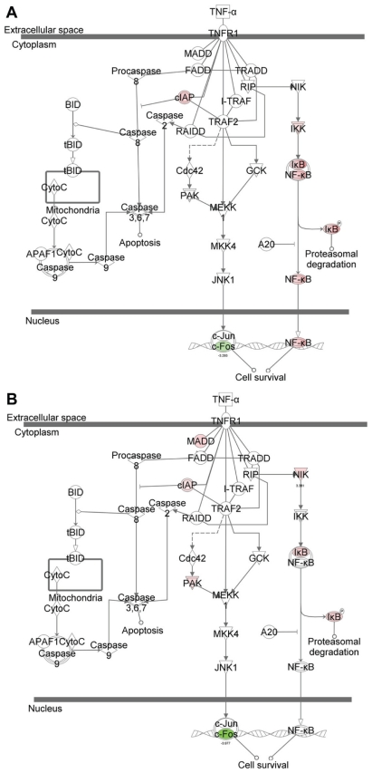 Graphical representations of TNFR1 signaling pathways and comparison of the gene- perturbation induced by the treatments. ( A ) TNF-α challenge without α-tocopherol pre-treatment; and ( B ) TNF-α challenge with α-tocopherol pre-treatment, respectively. Notes: Red-notes and green-notes indicate up- and down-regulated genes, respectively. For simplication, α-tocopherol treatment is not shown.