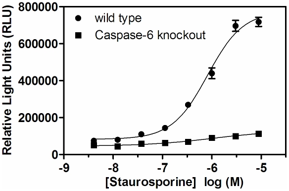 Apoptosis-mediated cleavage of lamin A/C is elevated in wild-type relative to caspase-6 KO fibroblasts. Fibroblasts derived from caspase-6 KO (▪) or wild type (•) mice were treated with the indicated concentration of staurosporine for 6 hours prior to detection of the small lamin A/C cleavage product. The assay was performed in quadruplicate two times with similar results; mean and standard error of the mean are reported.