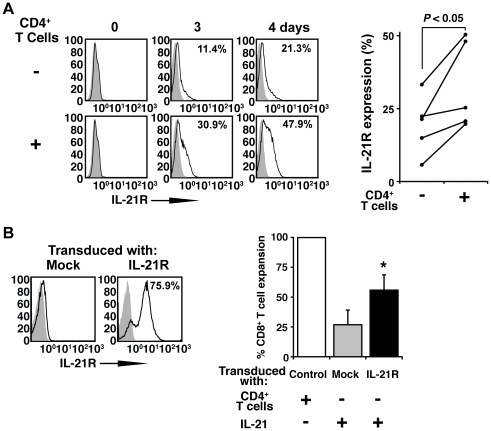 IL-2/IL-21 and upregulation of <t>IL-21R</t> expression replace CD4 + T cell help of CD8 + T cell expansion in vitro. ( A ) IL-21R expression on CD8 + T cells stimulated with aAPC/mOKT3 in the presence or absence of CD4 + T cells was studied by flow cytometry. On the left, histogram plots for 1 donor is shown and, on the right, IL-21R expression on day 4 is displayed for 5 donors. ( B ) IL-21R expression on CD8 + T cells ectopically transduced with mock or IL-21R is shown (left). Expansion of transduced CD8 + T cells stimulated twice by aAPC/mOKT3 with or without IL-21 is compared (right). Percent expansion was calculated by dividing the number of expanded transduced CD8 + T cells by that of CD8 + T cells stimulated in the presence of CD4 + T cells. Values indicate mean of four independent experiments; error bars show s.d. * P