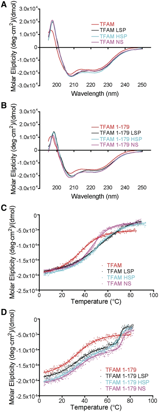 CD analysis. ( A ) CD scans in units of molar protein ellipticity of 10 µM TFAM and ( B ) TFAM 1-179 in the absence (red) and presence of equimolar concentrations of 25 bp LSP (black), HSP1 (cyan), and NS (magenta) DNA sequences. Spectra represent an average of three independent experiments. The experiental variation at 222 nm was
