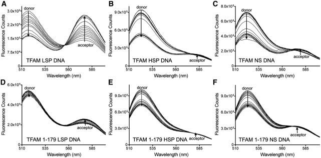 FRET Measurements for <t>LSP,</t> HSP and NS <t>DNA.</t> Representative fluorescence emission spectra of 3.4 nM FAM/TAMRA labeled DNA with TFAM or TFAM 1-179 titrated as indicated, ( A ) LSP DNA with TFAM (0–23.8 nM), ( B ) HSP1 DNA with TFAM (0–40.8 nM), ( C ) NS DNA with TFAM (0–40.8 nM), ( D ) LSP DNA with TFAM 1-179 (0–40.8 nM), ( E ) HSP1 DNA with TFAM 1-179 (0–40.8 nM), ( F ) NS DNA with TFAM 1-179 (0–40.8 nM).
