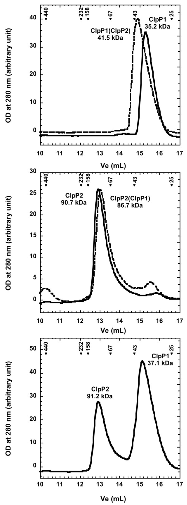 Oligomeric assembly of recombinant ClpP1 and ClpP2 . 75 μg of recombinant ClpP1 (upper panel, solid line) or ClpP2 (middle panel, solid line) produced independently or in the presence of ClpP2 (upper panel, dashed line) and ClpP1 (middle panel, dashed line) respectively were loaded on a superdex 200 10/30 column as described in the Methods section. In the lower panel, 75 μg of ClpP1 were mixed with 75 μg of ClpP2 and incubated 2 h at room temperature before being loaded on the superdex 200 column. Arrowheads indicate the elution of molecular mass standards with their molecular mass in kDa and the deduced apparent molecular masses are shown under the corresponding protein names.