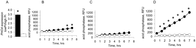Expression of PHO4 and production of acid phosphatase in response to phosphate limitation. (A) QRT-PCR analysis demonstrating the fold expression of PHO4 in (▪) ICU12 and (□) SN152 growing on low phosphate vs high phosphate solid PNMC medium. n = 3, p