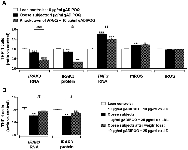 Regulation of IRAK3 expression in THP-1 monocytes. ( A ) Gene expression was analyzed by measuring relative RNA levels using qRT-PCR, protein expression and ROS production were determined by flow cytometry in THP-1 cells exposed to 1 or 10 µg/ml gADIPOQ (n = 6) or in IRAK3 -depleted THP-1 cells exposed to 10 µg/ml gADIPOQ (n = 4) for 6 h and 24 h. Data shown are means ± SEM of 24 h exposed cells normalized to 6 h exposed cells. * P