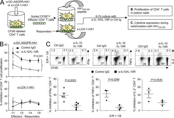 CD4 + T cells generated with α-DC-ASGPR-HA1 suppress HA1-specific IFN-γ–, TNF-, and IL-2–producing CD4 + T cell responses. (A) Experimental scheme for B and C. (B) FACS-sorted CFSE low effector cells generated with α-DC-ASGPR-HA1 (top) or α–LOX-1-HA1 (bottom) were co-cultured with IFNDCs (5 × 10 3 ) loaded with HA1 250-266 in the upper wells. Newly purified and CFSE-labeled CD4 + T cells (1–2 × 10 5 ) and IFNDCs (5 × 10 3 ) loaded with α–LOX-1-HA1 were co-cultured in the lower wells of trans-well plates. On day 6, proliferation of CD4 + T cells in the lower wells were assessed by measuring CFSE dilution. α–IL-10/IL-10R or control IgG was added. Statistical significance was tested by ANOVA. Three independent experiments showed similar results. Error bars represent SD. (C) Frequency of IFN-γ–, TNF-, and IL-2–expressing CD4 + T cells was measured. Each dot in lower panels represents data from independent experiments. P-values were acquired by Student's t test.