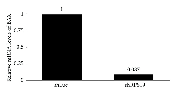 Changes of BAX expression in RPS19-silent colonic cells. Relative mRNA levels of BAX are quantified by qRT-PCR with TaqMan probes and normalized by individual level of 18 s rRNA. The relative expression level of shLuc-infected cells is considered as 1. Results are representative of those obtained in one experiment.