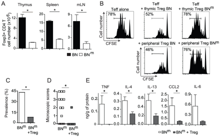 Impaired suppressive function of BN m Treg is involved in the development of intestinal lesions. (A) Absolute numbers of Foxp3+ CD4+ T cells in thymus, spleen and mLN from BN (n = 7) and BN m (n = 13) rats. Data are representative of three independent experiments. (B) Suppressive activity of thymic CD25 bright CD4+ SP cells (top panel) and peripheral CD25 bright CD4+ T cells (bottom panel) from BN or BN m rats was assessed in co-culture experiments with CFSE-labeled naive LEW CD4 T cells as effector cells. Proliferation was assessed by CFSE dilution (percentages indicate the proportion of CFSE low cells). Data are representative of three independent experiments. (C, D) Disease frequency (C) and duodenum microscopic scores (D) in 12 week-old BN m rats injected with PBS (white column or symbols; n = 21) or with 4.10 6 BN CD25 bright CD4+ T cells (grey columns or symbols; n = 12) at 4 weeks of age. (E) Cytokine protein expression in duodenum from control BN m rats with microscopic intestinal scores (white columns; n = 8) and from BN m rats transferred with CD25 bright CD4+ T cells (grey columns; n = 12).