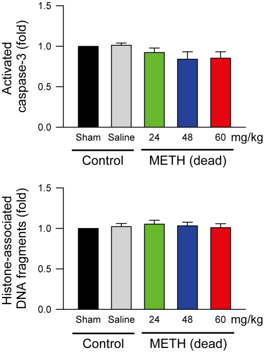 Methamphetamine did not induce apoptotic cell death in RVLM. Changes of activated caspase-3 or histone-associated DNA fragments in fold relative to sham-control group in samples collected from RVLM of rats that received saline or died of intravenous administration of METH. Values are mean ± SEM, n = 5–7 animals per experimental group. P > 0.05 among all groups in one-way ANOVA.