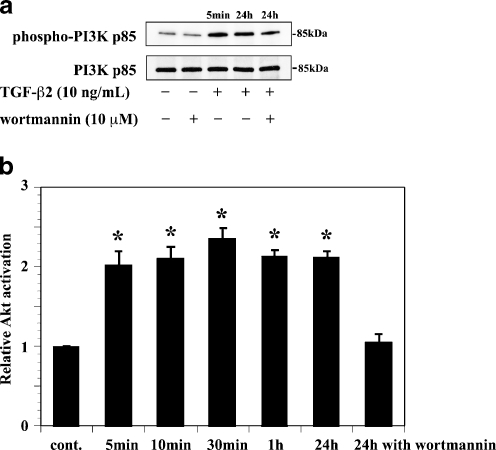 PI3K p85 and Akt activation induced by TGF-β2 in ARPE-19 cells. a PI3K p85 activation: lysates from cells pretreated with or without wortmannin (10 μM) and incubated in the presence or absence of TGF-β2 (10 ng/ml) for 5 min or 24 h. Bands corresponding to the phosphorylated form of PI3K p85 ( top ) and total PI3K p85 ( bottom ) were detected. Wortmannin did not inhibit TGF-β2-induced PI3K p85 activation. b Akt activation: lysates from cells incubated in the presence of TGF-β2 with or without pretreatment with wortmannin were analyzed using a kit. Wortmannin inhibited TGF-β2-induced Akt activation. Data represent the means ± SD of three independent experiments. * P