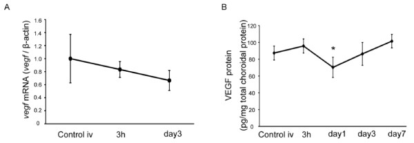 VEGF expression in the RPE-choroid complex . (A) vegf mRNA expression in the RPE-choroid complex analyzed by real-time (RT)-PCR. vegf mRNA did not increase after PDT. (B) VEGF protein expression analyzed by ELISA. VEGF protein decreased transiently 1 day after PDT. * p