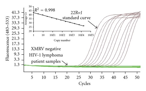 Real-time PCR analysis of HIV-1 lymphoma positive patients for XMRV. XMRV gag qPCR failed to detect XMRV from DNA isolated from PBMCs for the 26 HIV-1 lymphoma patients (green lines). Inset shows single-copy sensitivity of the assay.