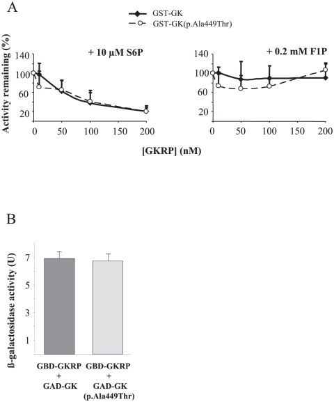 Effect of mutation p.Ala449Thr on the GK interaction with GKRP. A) Inhibition of glucokinase activity by human GKRP. Enzyme activity was measured at 5 mM glucose as described in Material and Methods , in the presence of 10 µM S6P (left panel) or 0.2 mM F1P (right panel). Results are means ± SEM for three independent enzyme purifications assayed in triplicate. B) Two-hybrid interaction of GBD-GKRP with GAD-GK or GAD-GK(p.Ala449Thr) mutant. Yeast strain Y187 was used, and fusion proteins were expressed from <t>pGBKT7</t> and pACTII derivatives. Values are means ± SEM from ß-galactosidase activity of six independent transformants. In control experiments, GBD-GKRP did not interact with GAD and GAD-GK did not interact with GBD [22] .