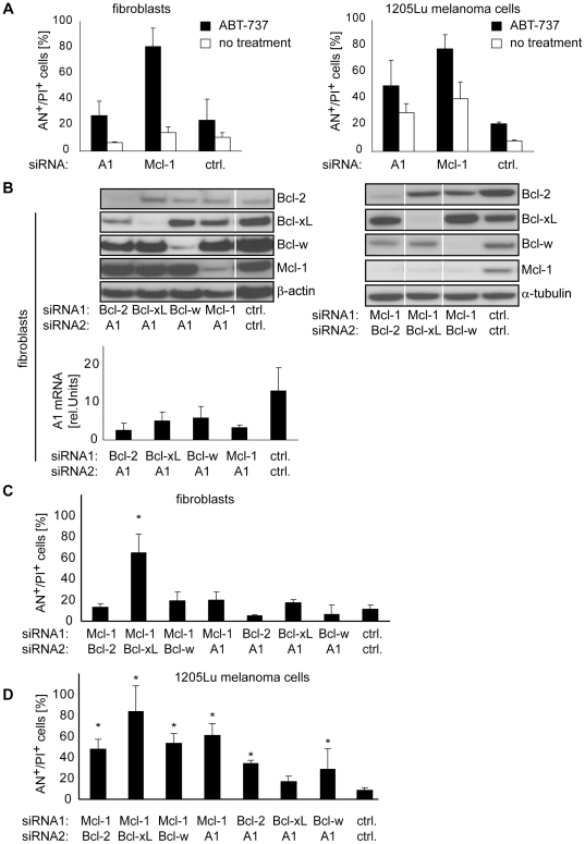 Melanoma-specific cell death can be enhanced by combined inhibition of Mcl-1 and A1. (A) Fibroblasts (left panel) and 1205Lu melanoma cells (right panel) were transfected with the indicated siRNAs for 48 hours. Thereafter, 1 µM ABT-737 was added and cell death was assessed 24 hours after ABT-737 treatment. (B) Fibroblasts were simultaneously transfected with two siRNAs as indicated. 48 hours after transfection the respective protein was analyzed by immunoblotting (upper panels) or RT-PCR (lower panel). Blots are representative for 3 (upper left panel) or 2 (upper right panel) independent experiments. Cell death analysis of (C) fibroblasts or (D) 1205Lu melanoma cells treated with the indicated siRNAs for 72 hours. Mean +/− SD of 3 independent experiments is shown in A, B, C and D. α-tubulin or β-actin served as loading control in immunoblots. White lines indicate lanes that were run at the same blot but are not contiguous. Asterisks represent significant increase in cell death compared to control siRNA-treated cells. AN, Annexin V; PI, propidium iodide.