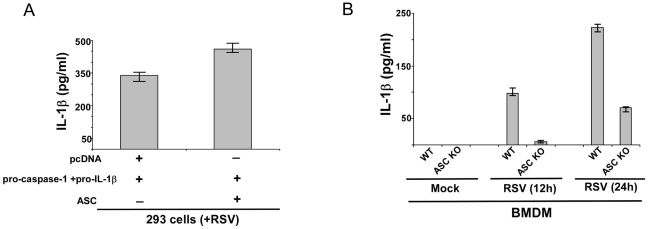 ASC expression is essential for IL-1β production during RSV infection. ( A ) 293 cells were transfected either with pcDNA (control), pro-IL-1β+pro-caspase-1 plasmids and ASC plasmid. At 24 h post-transfection, cells were infected with RSV (1 MOI). At 12 h post-infection, medium supernatant was assessed for IL-1β protein by ELISA analysis. ( B ) Wild type (WT) or ASC knock-out (KO) BMDMs were infected with RSV (1 MOI). IL-1β levels in the medium supernatant were assayed by ELISA at 12 h and 24 h post-infection. Each value represents the mean ± standard deviation from three independent experiments.