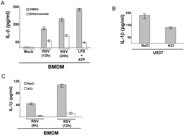 Potassium efflux plays a critical role in IL-1β production during RSV infection. ( A ) Wild type primary mouse bone marrow derived macrophages (BMDM) were infected with RSV (1 MOI) in the presence of ATP-sensitive potassium channel inhibitor glibenclamide (50 µM). DMSO served as the vehicle control. IL-1β levels in the medium supernatant were assayed by ELISA at 12 h and 24 h post-infection. Cells were also treated with LPS and ATP in the presence of either DMSO or glibenclamide. ( B ) U937 cells were infected with RSV (1 MOI) in the presence of buffer containing either NaCl (150 mM) (control) or KCl (150 mM). IL-1β levels in the medium supernatant were assayed by ELISA at 12 h post-infection. ( C ) BMDM were infected with RSV (1 MOI) in the presence of buffer containing either NaCl (150 mM) (control) or KCl (150 mM). IL-1β levels in the medium supernatant were assayed by ELISA at 6 h and 12 h post-infection. Each value represents the mean ± standard deviation from three independent experiments.