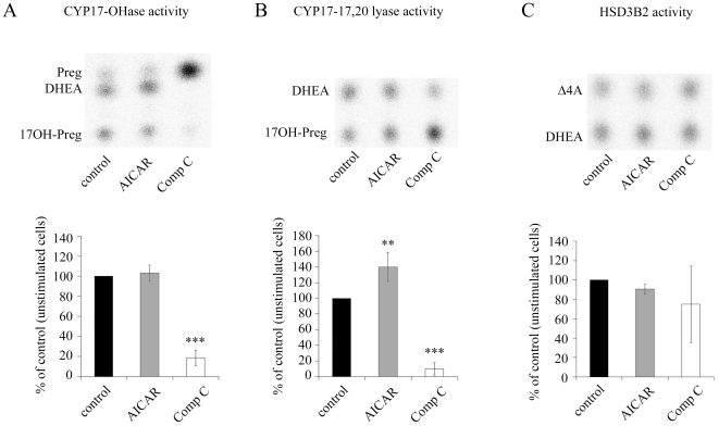 Effect of AMPK activator AICAR and inhibitor compound C on steroidogenesis in NCI-H295R cells. NCI-H295R cells were either stimulated with 1 mM AICAR or inhibited with 20 µM compound C (Comp C) for 48 h. HSD3B2 activity was blocked by 1 µM trilostane to specifically study the CYP17-OHase and CYP17-17,20 lyase activities. HSD3B2 activity was studied as a conversion of DHEA into androstenedione. Steroidogenesis was either labeled using 100,000 cpm/35-mm well of ( 3 H) pregnenolone (Preg), ( 3 H) 17OH pregnenolone (17OH-Preg) or ( 3 H) dehydroepiandrosterone (DHEA) as substrates for 90 min. Steroids were extracted from medium and resolved on TLC plates. A–C, representative TLCs (upper panel) and quantifications (lower panel) of CYP17-OHase (A), CYP17-17,20 lyase (B) and HSD3B2 (C) activities. Quantification was performed on four independent experiments. Results are expressed as a percentage of control, error bars are ±S.D. Δ4A, androstenedione. **, P