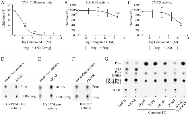 Direct effects of AICAR and compound C on enzyme activities of CYP17, HSD3B2 and CYP21A2 and effect on overall steroidogenesis in NCI-H295R cells. A–F yeast microsomes either co-expressing human CYP17 or CYP21 with human P450 oxidoreductase or expressing human HSD3B2 were incubated with 15 µM or 150 µM ( 14 C) progesterone (Prog), 50 µM ( 3 H) pregnenolone (Preg) or 50 µM ( 3 H) 17α-hydroxypregnenolone (17OH-Preg). At the same time, microsomes were incubated with either various concentrations of compound C or 1 mM AICAR to assess their effect on the activities of CYP17-OHase (A, D), CYP17-17,20 lyase (E), HSD3B2 (B, F) and CYP21A2 (C). G, effect of AICAR and compound C on overall steroidogenesis in NCI-H295R cells. Experiments were repeated independently two to three times. Error bars represent ±SEM. *, P