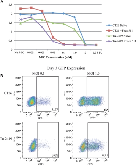Comparison of <t>CT26</t> and Tu-2449 in vitro susceptibility to Toca 511 (511) or MLV expressing GFP (MLV-GFP) vectors. Sensitivity to 5-FC was determined by measuring cell viability (MTS assay) over time in the absence or presence of titrating amounts of 5-FC (A). IC 50 values were calculated for CT26 and Tu-2449 cell lines at 4.2 μM (0.5 μg/mL) and 1.5 μM (0.19 μg/mL), respectively. Flow cytometry analysis was done to measure GFP positive cells transduced by MLV-GFP at an MOI of 1.0 or 0.1 (B).